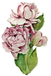 Roses from Jane Davenport's DS DotCard
