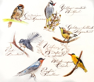 Urban Birds of the Philippines